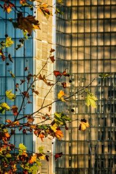 La BNF à l'automne. Architecte : Dominique Perrault