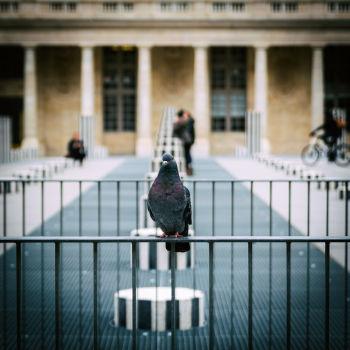 Non, je ne prends pas que des bâtiments en photo! Jardin du Palais Royal. Artiste : Daniel Buren